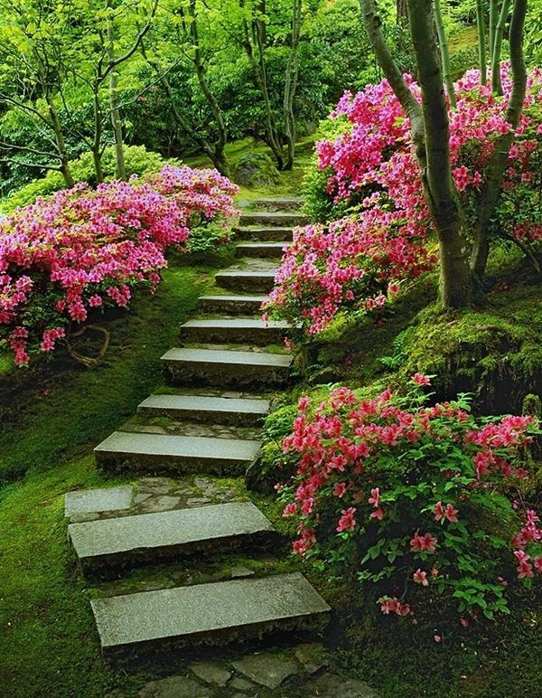 Fedora azaleas bloom along this walkway in Portland's Japanese Garden.